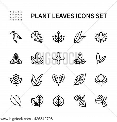 Leaves Of Useful Plants Vector Line Icons. Isolated Icon Collection Of Leaves Plants On White Backgr