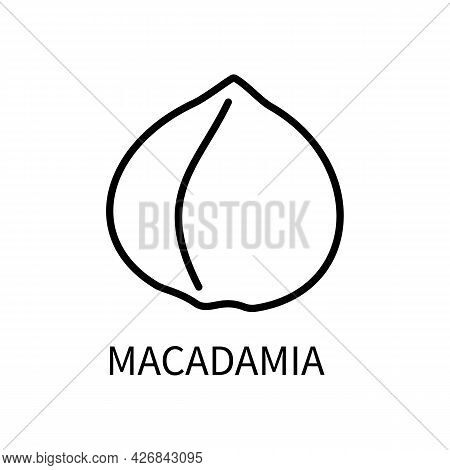 Icon Macadamia Line In A Simple Style. Source Obtaining Milk Vegetable Origin. Vector Sign In A Simp