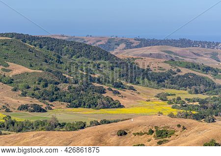 Cambria, Ca, Usa - June 8, 2021: Landscape With Yellow Mustard Seed Field In Center, Surrounded By D