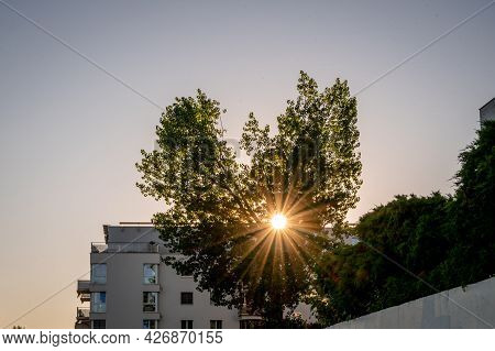 Sunset Over The City. Heart Shape Tree With Building In Sunny Day.