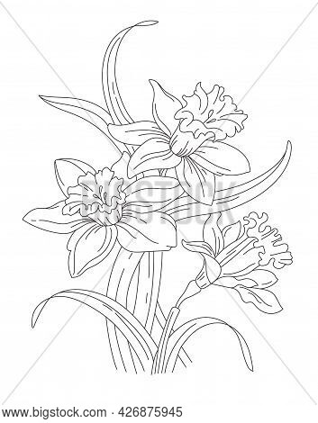 Nartsyssy, Bouquet Of Spring Flowers. .daffodils For Tattoo. Vector Line Art
