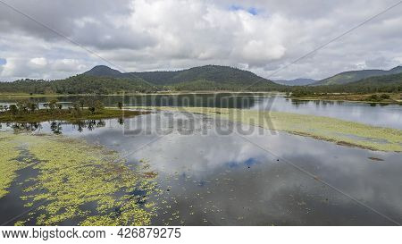 An Island On A Dam With A Swath Of Water Plants And Wildlife Swimming. Kinchant Dam, Queensland, Aus