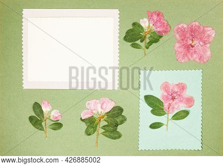 Page From An Old Photo Album. Flowers Azalea. Scrapbooking Element Decorated With Leaves, Flowers An