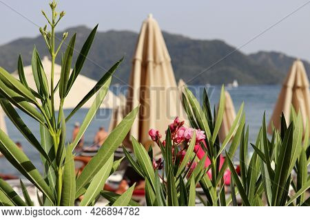 Sea Vacation, Defocused View Though Oleander Flowers To The Beach With Parasols. People Swimming And