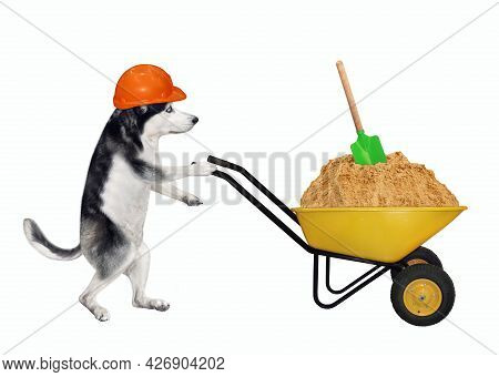 A Dog Husky Builder In A Construction Helmet Pushes A Wheel Barrow Full Of Sand. White Background. I