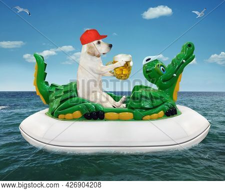 A Dog Labrador In A Red Cap With A Mug Of Beer Is Floating On An Inflatable Crocodile In The Sea At