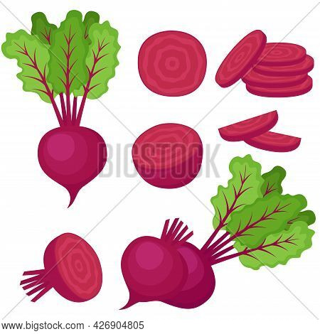 Beetroot, Whole Vegetable, Half And Slices, Vector Illustration