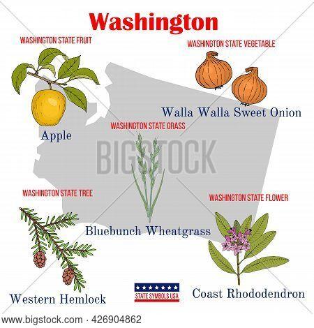 Washington. Set Of Usa Official State Symbols. Vector Hand Drawn Illustration