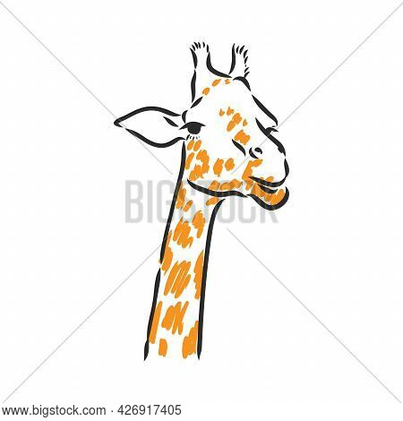 Giraffe - Isolated Vector With Spots Giraffe Vector