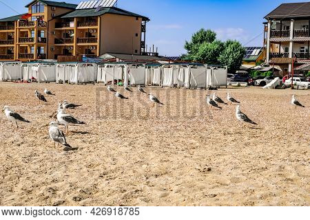 Many Seagulls Stand On A Sandy Beach Against The Background Of Cottages In The Resort Village Of Zal