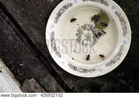 Dead Bees In A Saucer With Water Placed Outside A Beehive, Above View