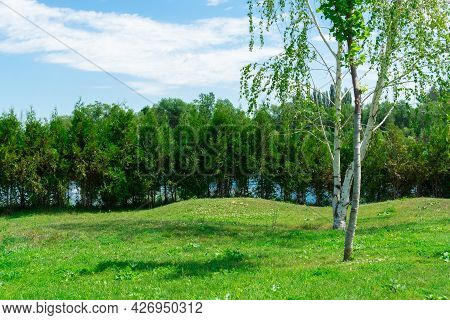 Birch Trees In A Picturesque Green Glade Against The Background Of Shrubby Trees
