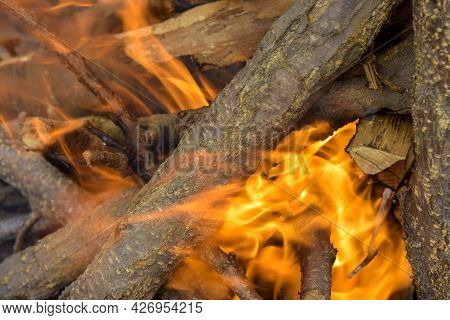 Bonfire Made Of Branches Of Fruit Trees. Flame Flutters In Wind. Sawn Apricot Wood. Process Of Prepa