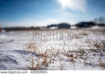 Windswept Backyard With Blades Of Dead Lawn Grass Poking Through Snow