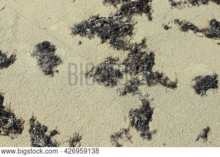 Texture Made Of Sand And Algae. High Quality Photo