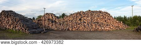 Forestry Logs Stacked Raw Construction Wood Industry Forest Cut Panoramic