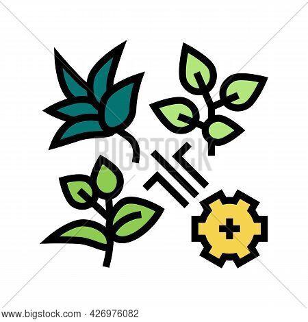 Breeding Varieties Of Tea Color Icon Vector. Breeding Varieties Of Tea Sign. Isolated Symbol Illustr