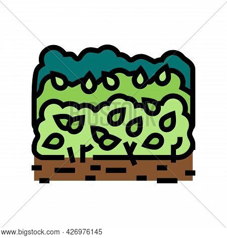 Cultivation Tea Leaves Color Icon Vector. Cultivation Tea Leaves Sign. Isolated Symbol Illustration