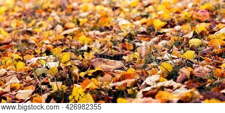 Dry Autumn Fallen Leaves In The Forest On The Ground