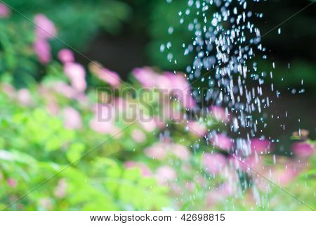 Flowers And Splashes