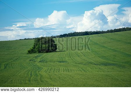 Large Lush Bush On Flat Green Field With Blue Sky And Clouds. Nature Bacground Or Wallpaper With Cop