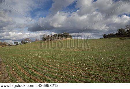 Cereal Crops In The Municipality Of Olmeda De Las Fuentes, Province Of Madrid, Spain