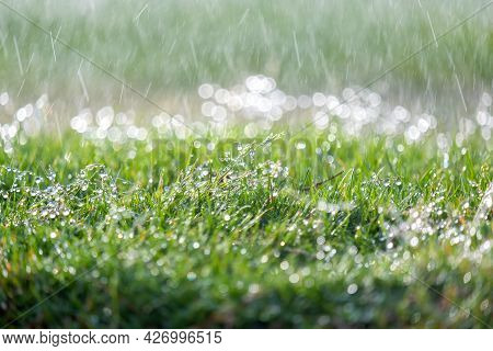 Closeup Of Rain Droplets Falling Down On Green Grass In Summer.