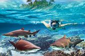 Woment snorkeling in the tropical water with dangerous bull sharks poster
