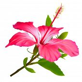Flower Hibiscus. Hawaiian aloha tropical plant poster