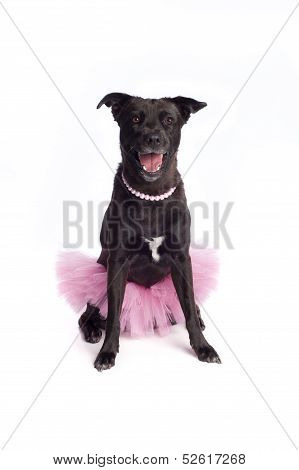 A happy, smiling, black, mixed-breed dog wearing a ballerina costume, consisting of a pink tutu and a pink pearl necklace. poster