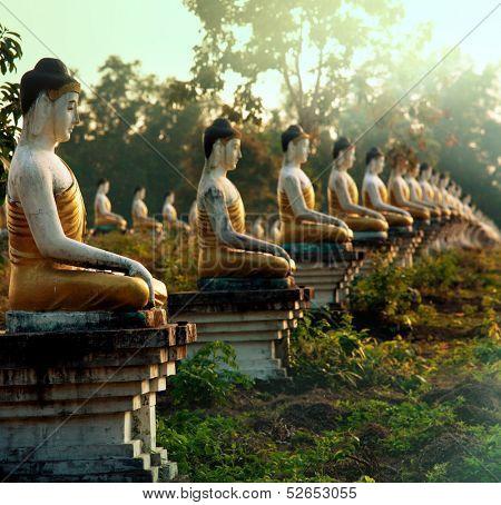 Buddhas statue garden