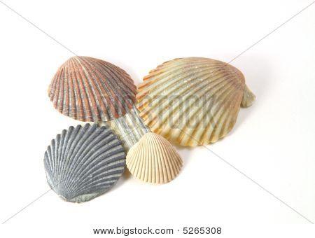 4 Colorfull Shells
