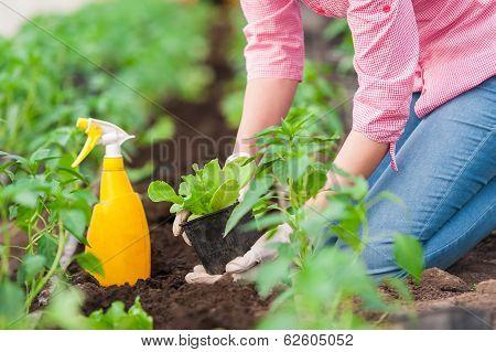 Woman gardener working on plants