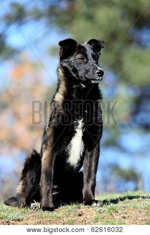 Black Small Dog