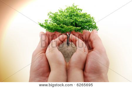 Hands And A Tree