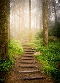 stairs going up hillside in forest toward sunset poster