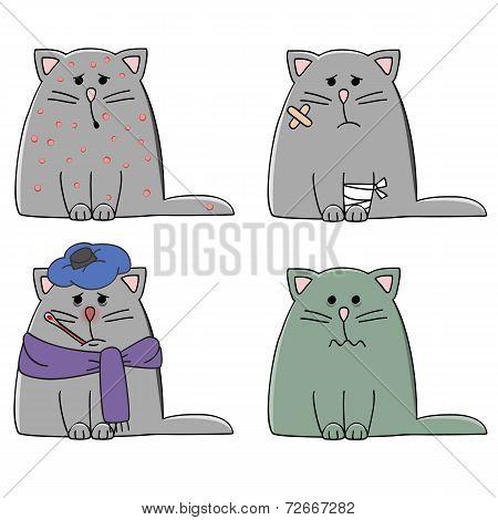 Cat Illness