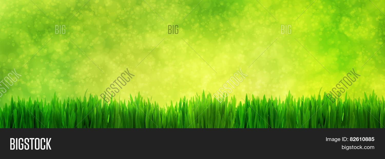 Fresh Green Grass Image Photo Free Trial Bigstock