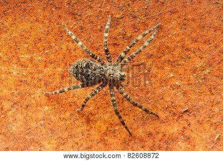 Deck Spider