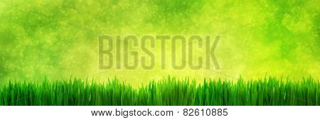Fresh green grass panorama on natural blur nature background with light sparkles and glitter. Super high resolution, premium quality banner.