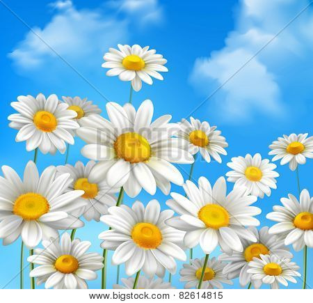 Daisies On Blue Sky