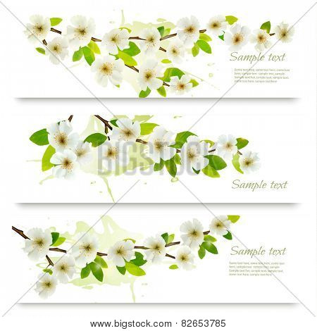 Three spring banners with blossoming tree brunch with spring flowers. Vector illustration