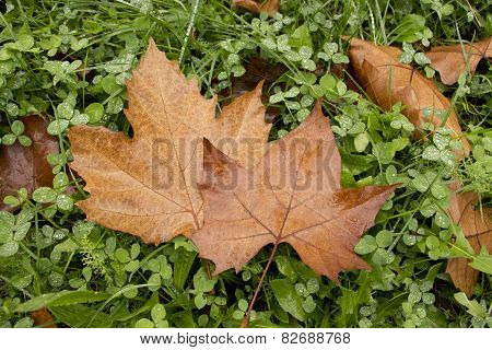 Leaves Couple