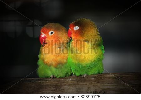 Two Lovebirds Close Together