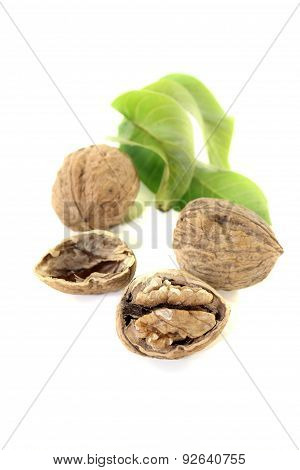 Walnut With Walnut Leaves