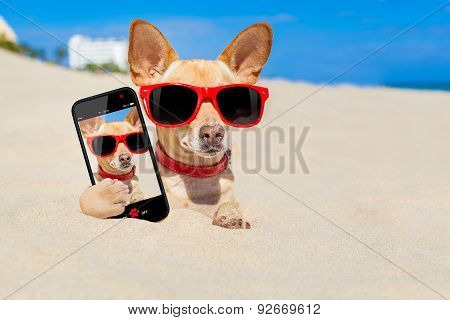 Dog  Selfie Buried In Sand
