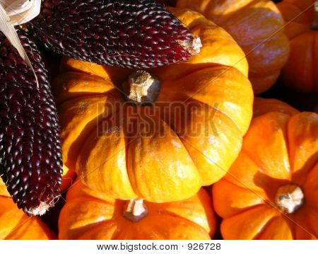 Indian Corn & Pumpkins