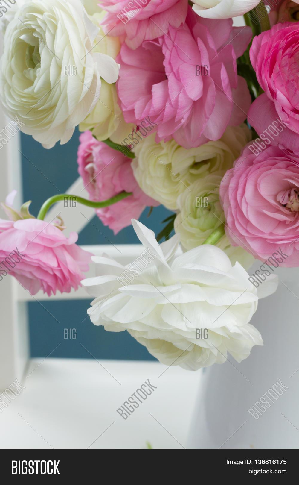 Pink White Ranunculus Image Photo Free Trial Bigstock