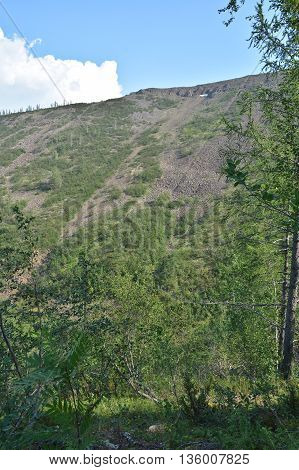 Mountain taiga of Eastern Siberia. The slopes of the mountains of the Putorana plateau covered with larch.