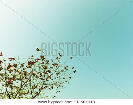 luminous zen tree